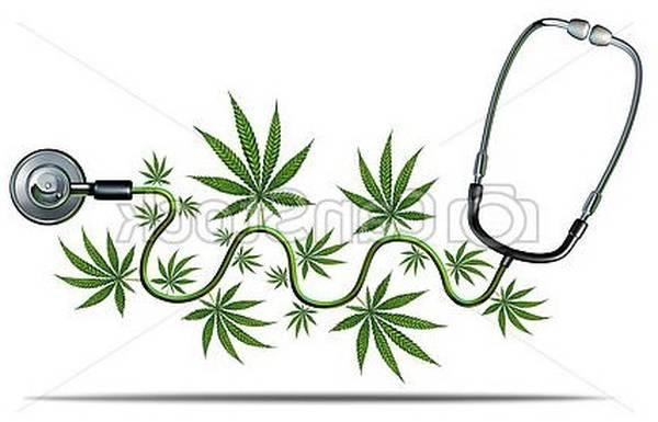 cannabis thérapeutique france 2019
