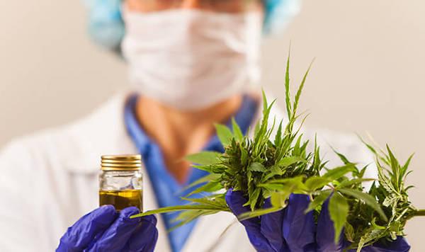 cannabis thérapeutique avis