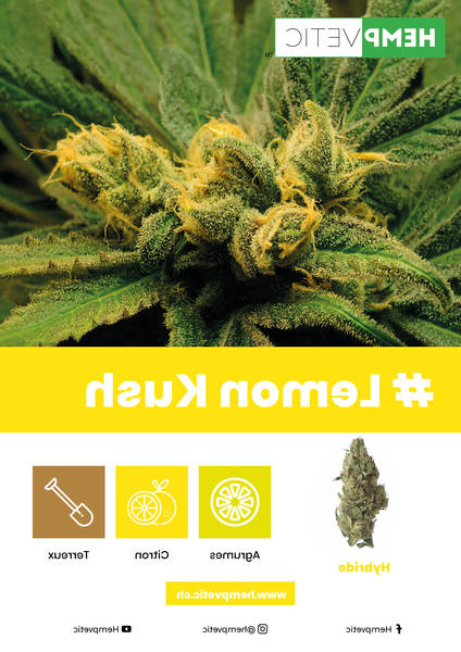 cannabis thérapeutique gouttes