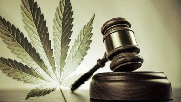 cannabis thérapeutique angers