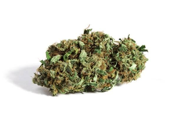 cannabis thérapeutique pour quelle maladie