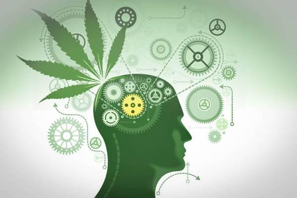 cannabis thérapeutique annoeullin