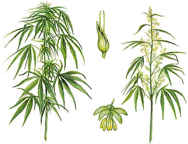 investissement cannabis thérapeutique