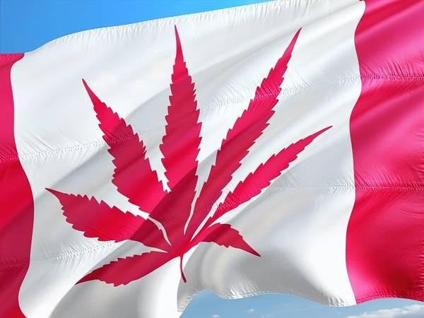 cannabis thérapeutique comment sen procurer