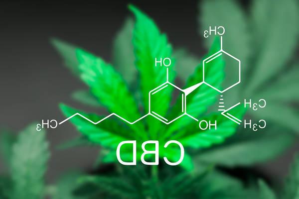 cannabis thérapeutique ofdt