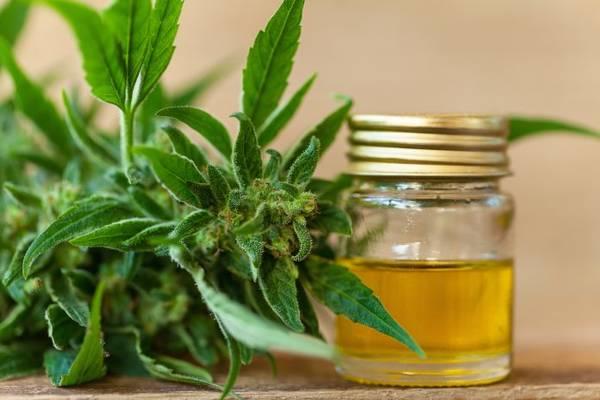 cannabis thérapeutique chimio