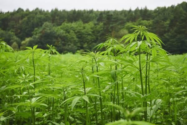 cannabis thérapeutique sida