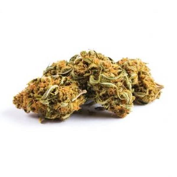 cannabis thérapeutique sclérose plaques