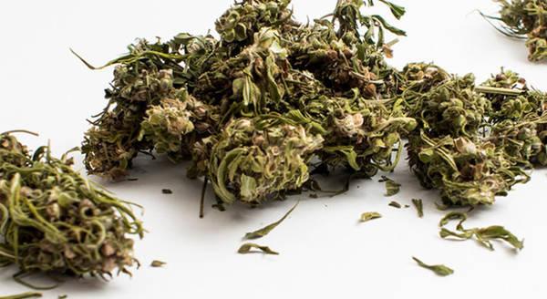 cannabis thérapeutique mandelieu