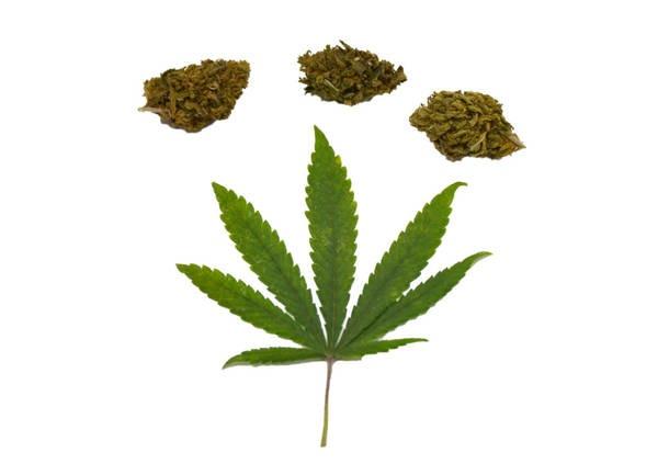 le cannabis thérapeutique désormais autorisé en france