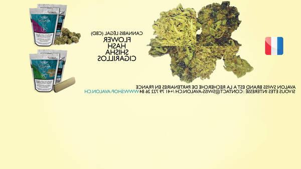 cannabis thérapeutique inflammation